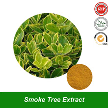 98% Fisetin Powder Extract from Smoke Tree Herb with Cas No.: 528-48-3