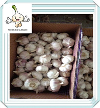 wholesale 2015 factory price indian garlic