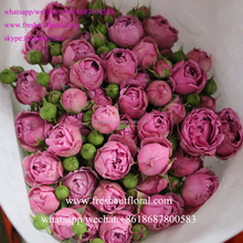Professional wholesale fresh cut flowers, like the Fresh Cut Roses, Fresh Cut Spray Roses