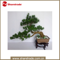 The popular indoor plastic artificial bonsai tree for sale