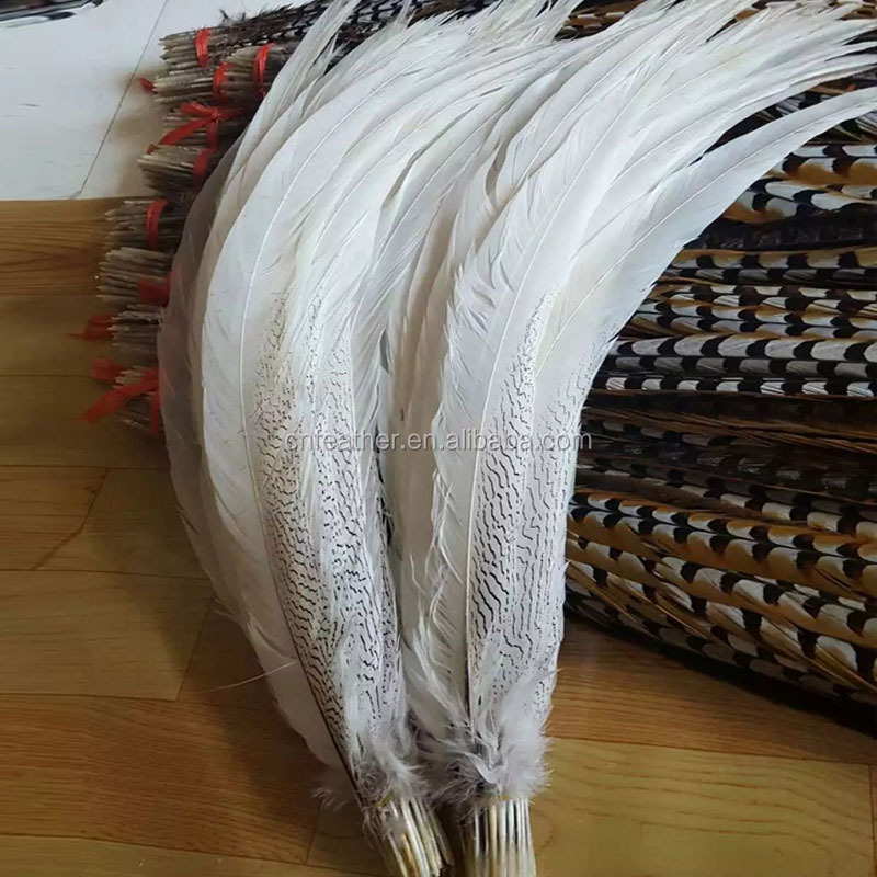 Bleached Natural pheasant feather White Silver Pheasant Feathers for carnival costumes even&party decoration