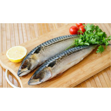 Frozen Fish Mackerel