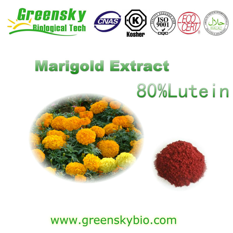 Natural Marigold Extract Powder