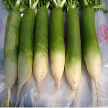 2017 New Crop Fresh Vegetable Green Radish