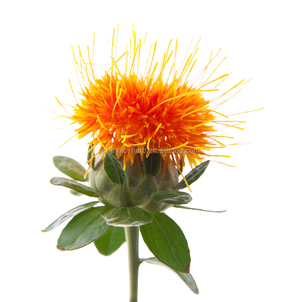 E 60 Safflower Yellow 1%-98% Safflower Extract <strong>Powder</strong>