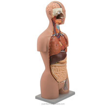 85CM Dual Sex Human Torso Model 27 Parts, mannequin torso anatomy