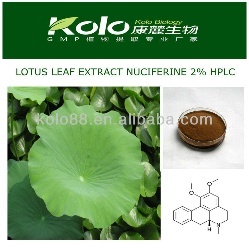 water soluble plant extract,powder extract,lotus nuciferine 2%-80%