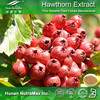 100% Natural Hawthorn Fruit Extract,Hawthorn Fruit Extract Powder,Hawthorn Fruit P.E.