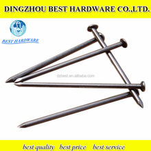 Common Round Wire Nails factory/ Common Round Iron Nails/Common Coil Nail