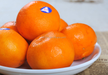 Fresh and juicy mandarin orange citrus kinnow