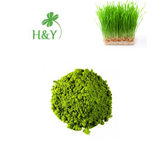 Top Quality Organic Wheat Grass Powder