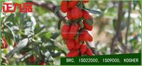 Beauty and Health Healthy Food Dried Goji Berriess Lycium Barbarum Herbal Fruit Goji berry