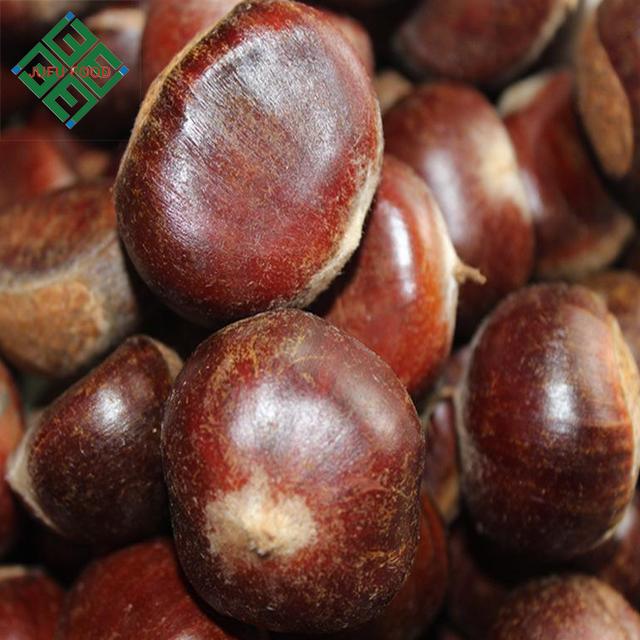 Shandong raw fresh chestnut from china