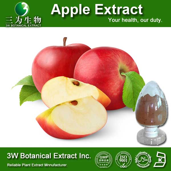GMP Factory Apple Extract Manufacturer,Dried Apple Powder Dried Apple Powder