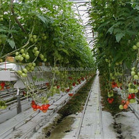 NFT Hydroponic System For Greenhouse