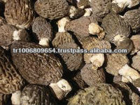 Morchella Esculenta Morel Morels Mushroom Dried Fresh Pure Natural Edible mushrooms yellow morel, true morel,Made in Turkey