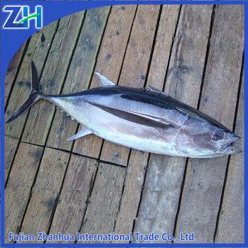 Fresh tuna price frozen tuna fish buy fresh tuna fresh for Tuna fish price