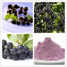 GHB Health Black Currant Extract Powder