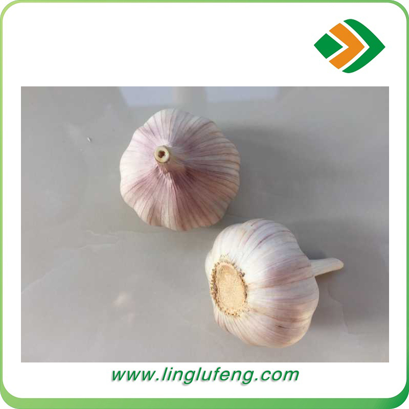 Fresh Jin Xiang brand 5cm 4.5cm normal white natural garlic