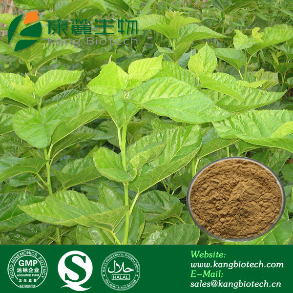 Cosmetic Ingredient White Mulberry Leaf Extract Powder