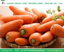 FRESH CARROTS EXPORT OVERSEAS MARKET ON GOOD QUALITY