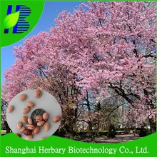 Hot sale bonsai tree seeds, planting cherry seeds