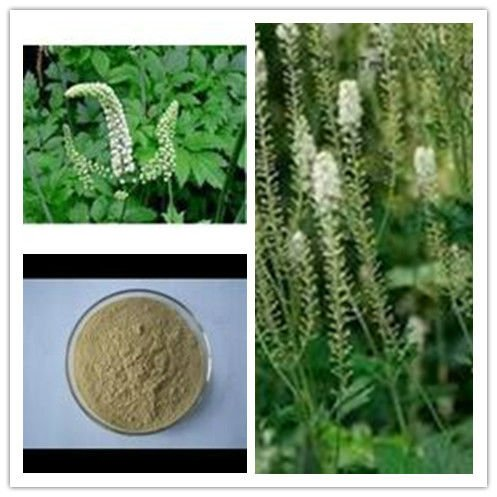 Top Pure Natural Black Cohosh Extract Triterpene glycosides