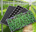 72 cell plastic seed trays ,cell seed trays ,black seed trays for greenhouse