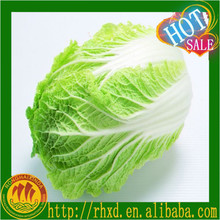 Chinese Cabbage High Quality For Sale fresh chinese cabbage