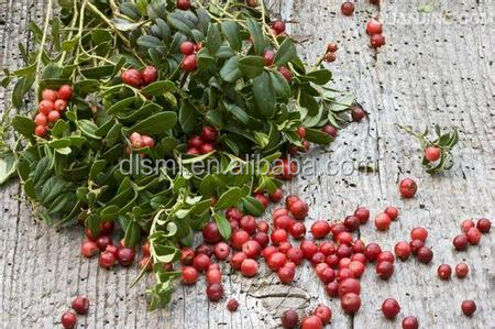 Factories supplying Cranberry Extract 25% anthocyanidin