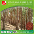 best quality of Pine Bark extract