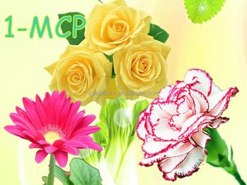 1-MCP Antistaling Agent for Cut Flowers