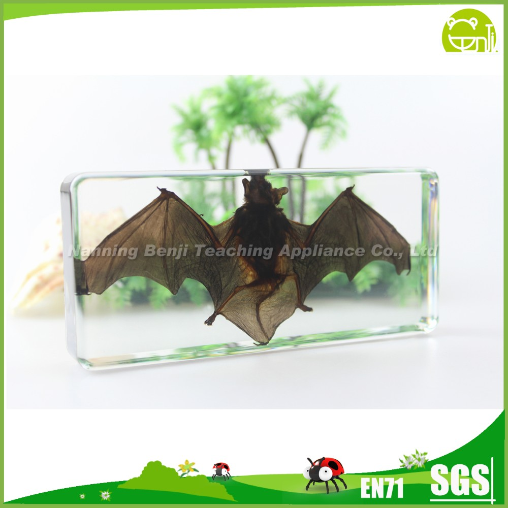 Educational Teaching Aids of Stick Insect Bat