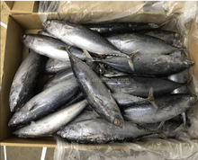 Various types of frozen skipjack fish bonito sarda bonito for sale/canned