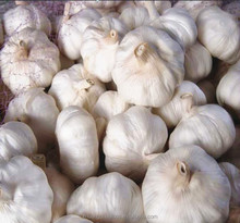 China factory wholesale fresh garlic in carton