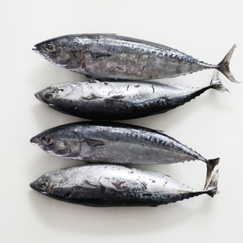 New Arrival Hot Sale Frozen Bonito