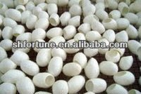Eco-friendly Fresh Natural Silk Beauty Cocoons for skin care.