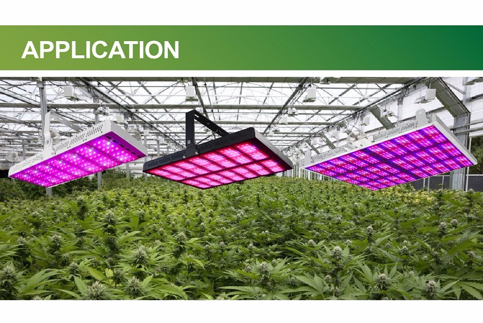 LUXINT led lighting for seed plants growth waterproof 8*8ft cover area 2000w full spectrum led grow light for medical growing