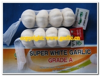 China Fresh Normal or Pure White Garlic 4 pcs/bag