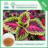 China GMP certificated Natural Coleus Forskohlii extract for Weight loss Coleus forskohlii root extract with free sample