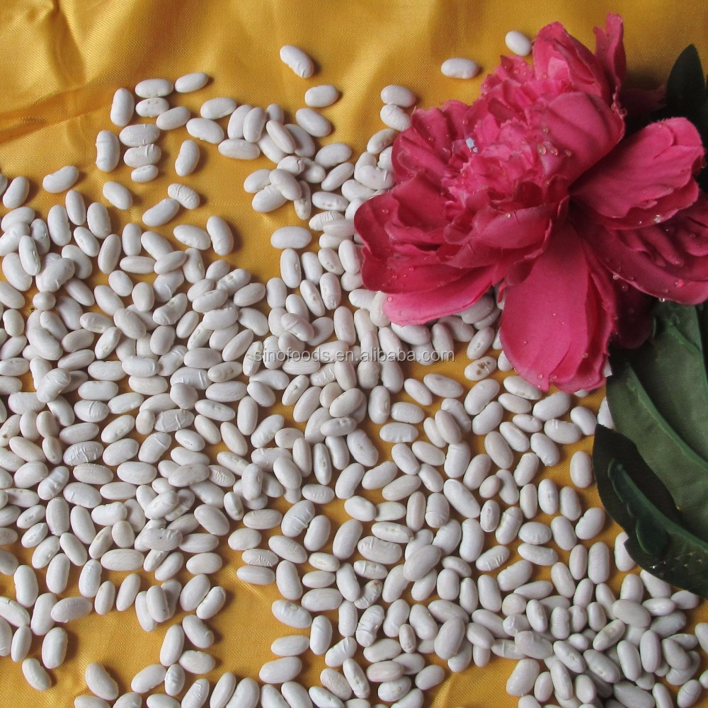 WKB spain white kidney beans for sale and bulk beans for sale