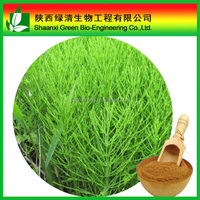 Horsetail P.E./Equisetum arvense L/herba equiseti arbensis/ marestail extract/Bottlebrush extract / meadow pine extract