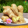 Competitive Price Of Per Ton New Crop Organic Fresh Nature Yellow Mature Big Size Ginger