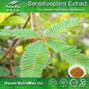 Hot sale Plant extract Mimosa extract/Mimosa pudica powder/Sensitive plant herb extract