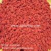 top quality new crop wolfberry fruit goji berry supplier
