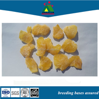 products pet bird food dried fruit