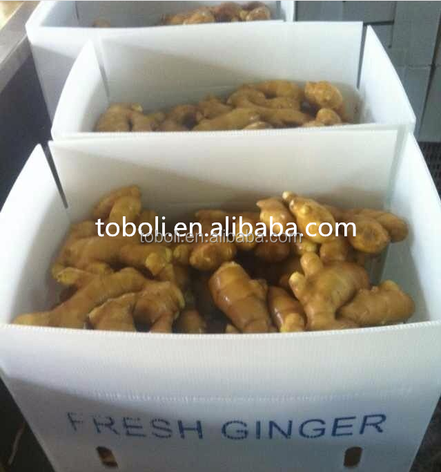 bulk fresh ginger price per ton