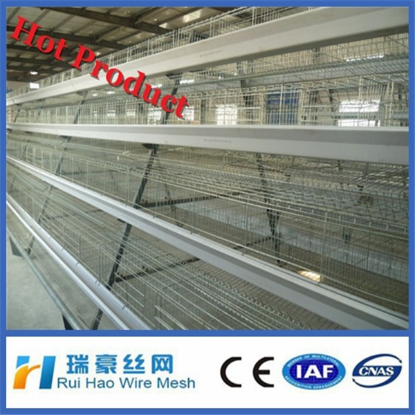 export uganda poultry farm automatic chicken layer cage