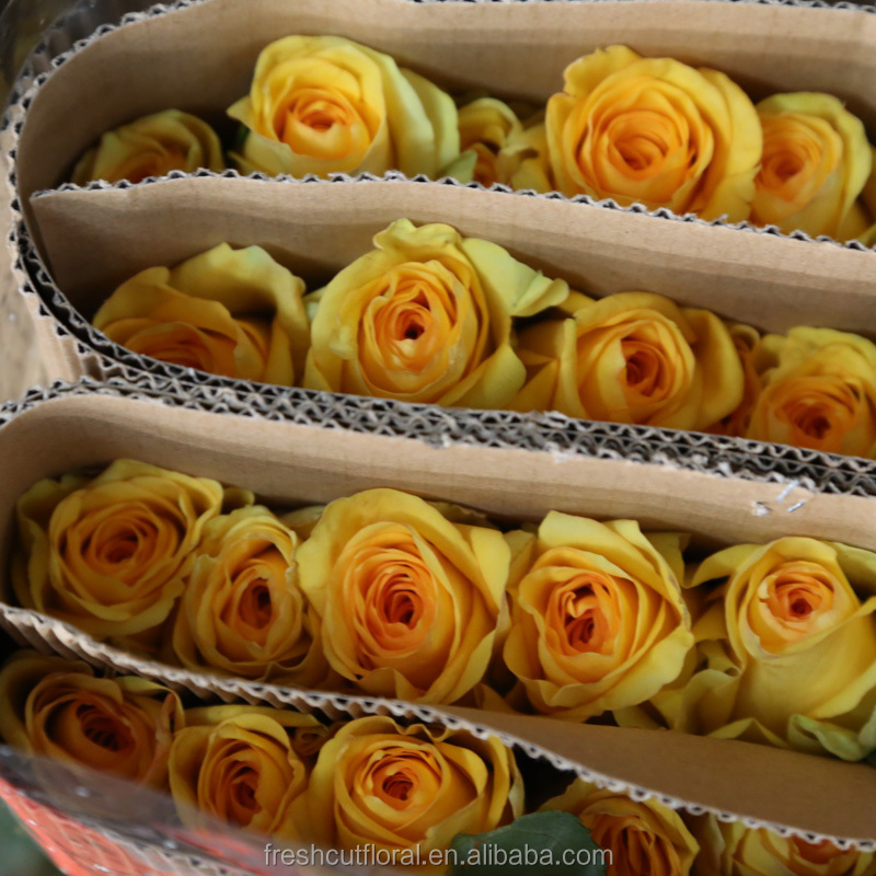 Long stem golden yellow roses cut fresh cut rose flower cheap on sale