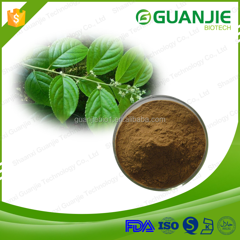 Supply high quality free sample 100% natural 98% Asiaticoside Gotu kola extract/Centella asiatica extract